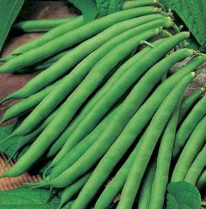 haricots-verts-french-beans