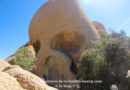 {Joshua Tree} Skull Rock